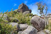 Peak Prateleiras Mountain Old Tree In Itatiaia National Park, Brazil