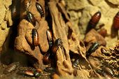 picture of terrarium  - The beetles on a stone at the terrarium - JPG