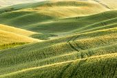 View on the tracks in wheat fields and grass meadows in Tuscany, Italy