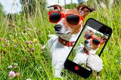 stock photo of hot dogs  - dog in grass taking a selfie looking so cool - JPG