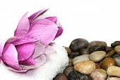stock photo of magnolia  - Magnolia blossom and rocks isolated on white
