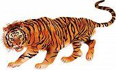 walking tiger - vector
