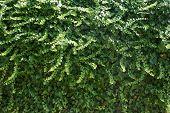 green wall - 1
