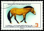 Vintage  Postage Stamp.  Horse Prezhivalskogo.
