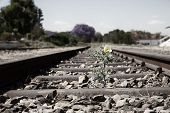 Old Used Railway Tracks In Duotone And Small Flower In Colour Artistic Conversion