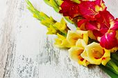 pic of gladiolus  - yellow and red gladiolus on a wooden background. holidays and events.copy space for you text ** Note: Soft Focus at 100%, best at smaller sizes - JPG