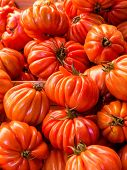 fleichtomaten, beefsteak tomatoes, symbol photo for food, fresh, healthy food