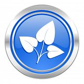 leaf icon, blue button, nature sign