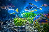 foto of biodiversity  - Colorful aquarium - JPG