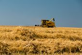image of harvest  - Yellow harvester harvesting the ripe crop on a sunny summer day - JPG