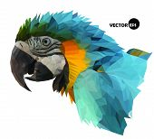 foto of green-winged macaw  - colorful macaw parrot - JPG