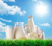 stock photo of milk products  - Dairy products on the grass - JPG