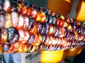 Colorful Indian Corn Close Up
