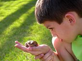 Boy Curious Of Toad