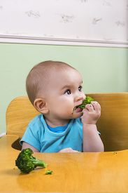 stock photo of teething baby  - Beautiful baby eating broccoli pieces in her chair - JPG