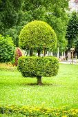 stock photo of manicured lawn  - landscape design in park - JPG