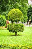 pic of tree trim  - landscape design in park - JPG