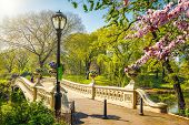 Bow bridge in Central park at spring sunny day, New York City poster