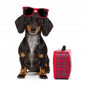 Dachshund Sausage Dog On Vacation poster