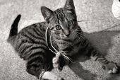 Kitten Reaching