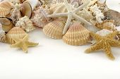 Beach objects. Shells isolated on white