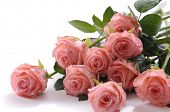 stock photo of pink roses  - pink roses - JPG