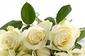 foto of white roses  - Beautiful bouquet of white roses - JPG