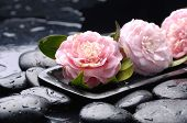 still life with bowl of pink Camellia flower