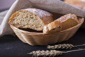 Fresh Baked Ciabatta With Ears. Fresh Bread poster