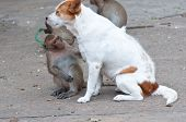 image of flea  - Monkeys checking for fleas and ticks in the dog
