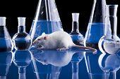 Animal Laboratory