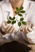 Eco laboratory, plant