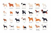 Collection Of Adorable Dogs Of Various Breeds Isolated On White Background. Bundle Of Cute Funny Pur poster