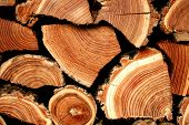 Background From Sawn Logs And Firewood. A Wall Of Wooded Firewood poster