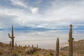 picture of peyote  - Cardon cactus at Isla de Pescado bolivia - JPG
