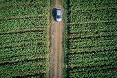 Aerial View Of Modern Car On The Road In Green Corn Field. Road Trip In Countryside. Auto Performanc poster
