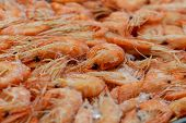 Fresh Thawed Delicious Shrimp With Twisted Tails Close-up. Macro Photo Of A Counter With Fresh-froze poster