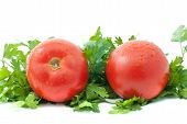 Two Ripe Tomatoes With Drops Of Water And Some Parsley