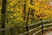 picture of split rail fence  - Beautiful redorange and yellows colors of autumn along a split rail fence - JPG