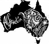 Merino Ram As Australian Symbol