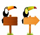 colorful toucan birds sitting on a blank wooden sign board