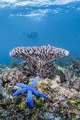 blue starfish and underwater sea scape