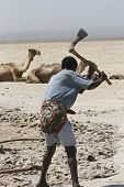An Afar tribesman digging salt in the desert