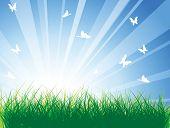 Prado primavera com grama verde