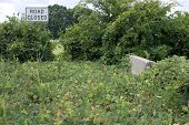 Pavement Overgrown With Kudzu Points To Road Closed Sign