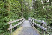 Wooden Foot Bridge Along Hiking Trail