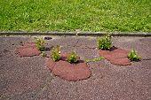 Vegetation on asphalt, the nature resumes its rights