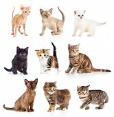 stock photo of pussy  - Different kittens collection - JPG