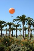 IRVINE; CA - June 13: Tethered Balloon rises above the Great Park Palm Court in Irvine, CA on June 1