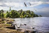 Gulls Against The Backdrop Of The Church Of St. Nicholas The Wonderworker. Nikitsky Monastery On Val